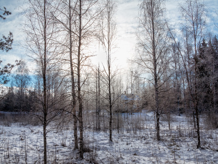 The house in the winter, snow forest, frosty morning.