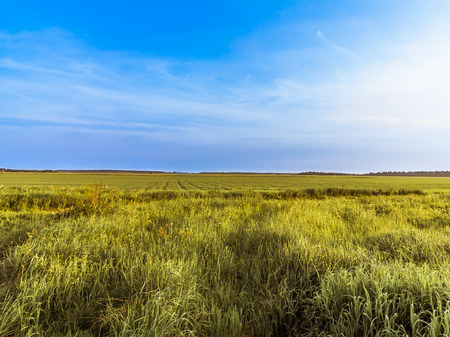Boundless field and blue sky, clear summer day