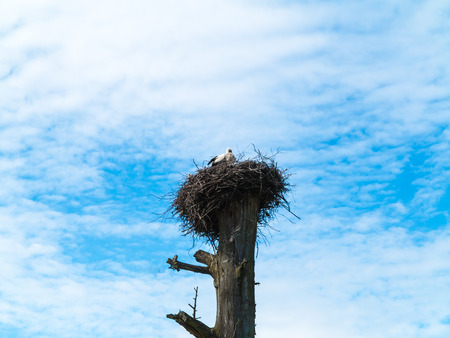 Stork sitting in a nest on a tree against the blue sky.