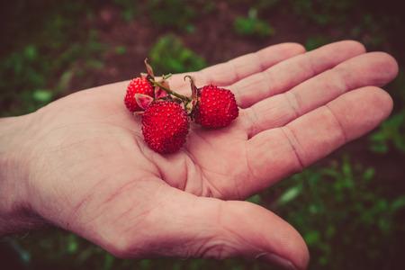 Some berries ripe Tibetan strawberry in hand.