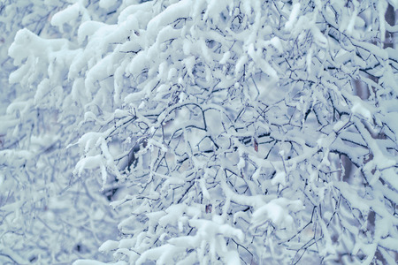 Winter snowing, branches with autumns leaves with snow covering. Snow drop on leafs in Moscow, Russia. 스톡 콘텐츠
