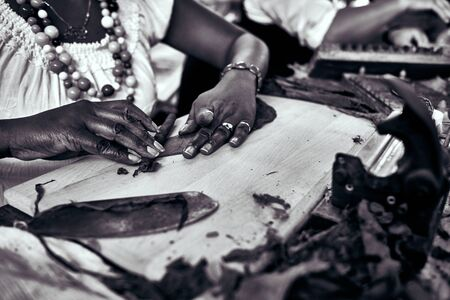 Closeup of woman hands making cigar from tobacco leaves. Traditional manufacture of cigars. Demonstration of production of handmade cigars. Hands rolling dried and cured tobacco leaves.