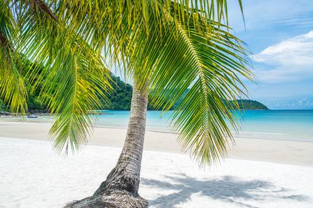 island paradise: Paradise Beach on Tropical Island