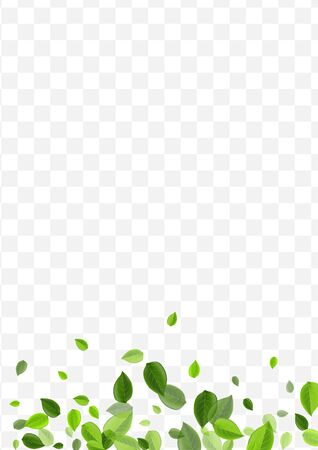 Swamp Leaves Vector Brochure. Lime Foliage Tree Pattern. Fly Concept. Grassy Greens Organic Background.