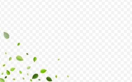 Lime Leaf Vector Backdrop. Forest Leaves Organic Brochure. Swirl Poster. Olive Greens Tea Wallpaper.