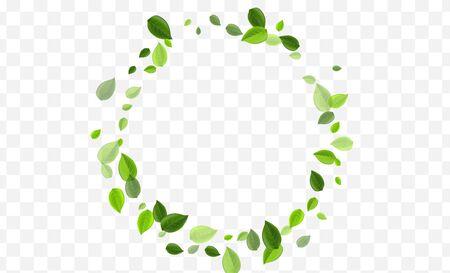 Mint Foliage Vector Design. Swamp Leaf Fresh Banner. Ecology Illustration. Green Greens Swirl Pattern. Ilustração