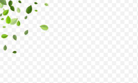Green Leaf Vector Illustration. Grassy Leaves Ecology Poster. Flying Brochure. Mint Greens Transparent Pattern. Ilustração