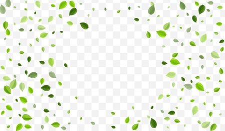 Olive Leaf Vector Design. Grassy Leaves Realistic Template. Flying Background. Forest Greens Ecology Wallpaper.