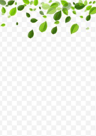 Lime Leaves Vector Poster. Mint Greens Fresh Banner. Falling Border. Forest Leaf Flying Pattern.