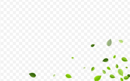 Lime Leaves Vector Border. Olive Foliage Motion Plant. Transparent Brochure. Mint Greens Forest Wallpaper. Zdjęcie Seryjne - 142132309