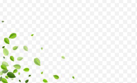 Mint Foliage Vector Banner. Olive Greens Fly Backdrop. Blur Poster. Swamp Leaf Realistic Brochure. Vector Illustratie