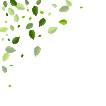 Green Foliage Abstract Vector Wallpaper. Realistic Greens Poster. Mint Leaves Fresh Illustration. Leaf Organic Banner.