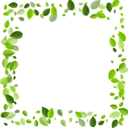 Olive Leaves Forest Vector Plant. Falling Greens Poster. Green Leaf Realistic Concept. Foliage Swirl Template.