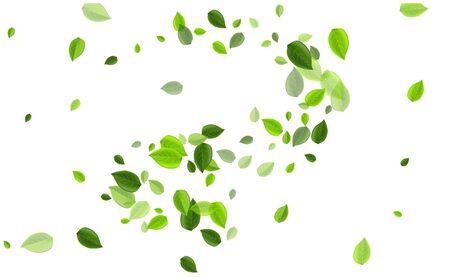 Lime Leaf Organic Vector Poster. Tree Leaves Plant. Mint Greens Tea Pattern. Foliage Motion Brochure.