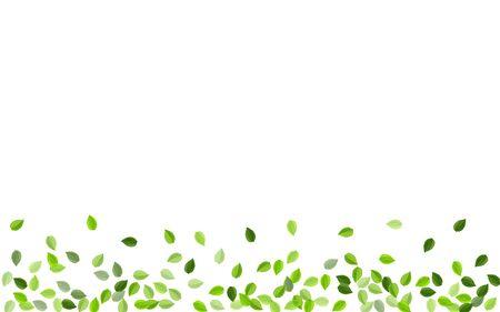 Lime Leaf Spring Vector Branch. Ecology Greens Design. Forest Leaves Abstract Banner. Foliage Fresh Illustration.