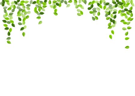 Forest Foliage Tea Vector Branch. Realistic Leaf Plant. Grassy Leaves Transparent Illustration. Greens Wind Banner.