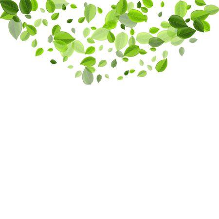 Grassy Leaves Flying Vector Design. Fly Foliage Illustration. Mint Leaf Transparent Plant. Greens Wind Brochure.