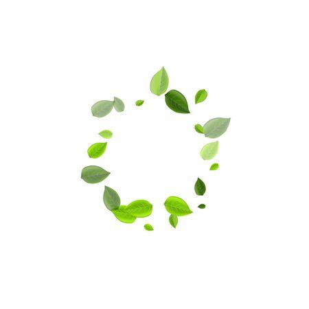 Modèle de vecteur transparent de verts de chaux. Branche de feuille volante. Illustration de tourbillon de feuilles de menthe. Bannière abstraite de feuillage. Vecteurs