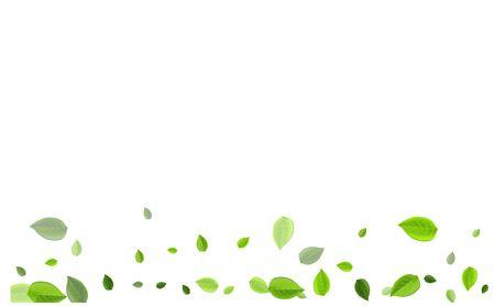 Grassy Foliage Spring Vector Brochure. Falling Leaf Border. Forest Leaves Forest Wallpaper. Greens Blur Branch. Ilustração