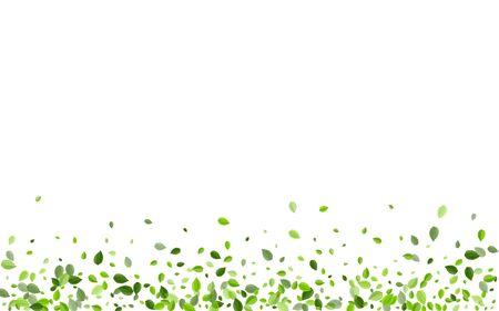 Lime Greens Falling Vector Branch. Transparent Leaf Illustration. Olive Leaves Flying Wallpaper. Foliage Forest Plant.