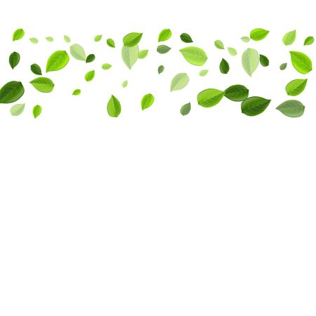 Mint Foliage Realistic Vector Background. Falling Greens Template. Lime Leaves Organic Plant. Leaf Swirl Backdrop.