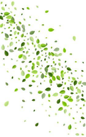 Olive Leaves Nature Vector Background. Organic Greens Border. Mint Foliage Tea Plant. Leaf Falling Pattern.