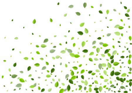 Swamp Greens Tree Vector Banner. Blur Foliage Border. Forest Leaf Organic Backdrop. Leaves Flying Background.