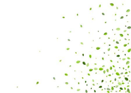 Grassy Greens Transparent Vector Poster. Fresh Leaf Concept. Olive Leaves Forest Design. Foliage Nature Plant.