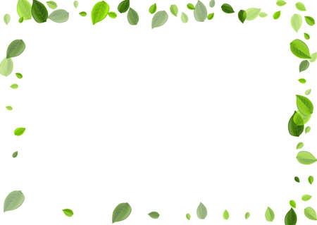 Swamp Foliage Flying Vector Background. Realistic Leaves Backdrop. Lime Leaf Ecology Banner. Greens Spring Brochure.