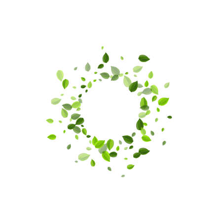 Olive Greens Flying Vector Poster. Ecology Foliage Concept. Green Leaves Herbal Pattern. Leaf Falling Plant.