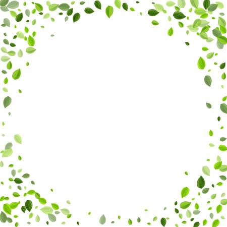 Olive Leaf Herbal Vector Plant. Nature Leaves Border. Forest Greens Fly Wallpaper. Foliage Spring Illustration.