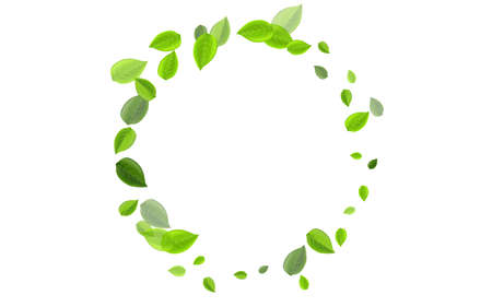 Mint Leaf Fresh Vector Concept. Tea Leaves Pattern. Grassy Foliage Spring Design. Greens Realistic Backdrop. Ilustrace