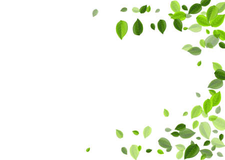 Mint Leaf Transparent Vector Pattern. Herbal Greens Concept. Green Foliage Nature Border. Leaves Swirl Background. Ilustrace