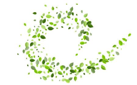 Lime Greens Fresh Vector Brochure. Organic Leaves Pattern. Green Foliage Tea Concept. Leaf Nature Design. Ilustrace