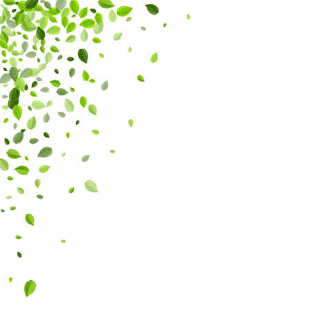Forest Foliage Nature Vector Banner. Fly Greens Plant. Lime Leaves Spring Border. Leaf Realistic Brochure.