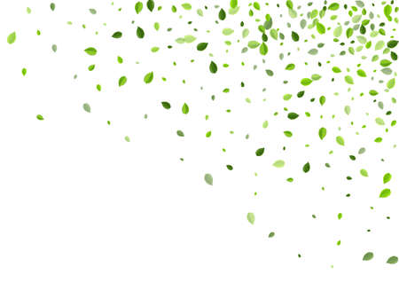 Lime Foliage Swirl Vector Design. Organic Greens Wallpaper. Swamp Leaves Tree Concept. Leaf Flying Border. Ilustrace