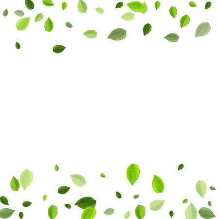 Swamp Greens Herbal Vector Brochure. Realistic Foliage Concept. Mint Leaves Tree Pattern. Leaf Fly Illustration.