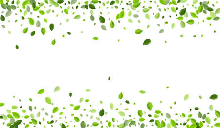 Mint Foliage Organic Vector Branch. Realistic Leaves Background. Green Leaf Wind Illustration. Greens Ecology Banner.