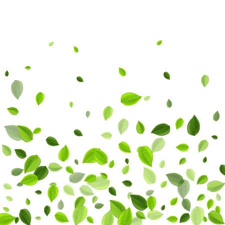 Grassy Leaf Organic Vector Border. Abstract Foliage Template. Green Greens Flying Branch. Leaves Motion Illustration. Ilustração