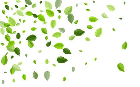 Grassy Greens Abstract Vector Brochure. Fly Leaf Background. Olive Leaves Nature Concept. Foliage Flying Illustration. Ilustração