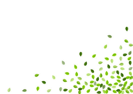Swamp Leaf Realistic Vector Template. Falling Leaves Banner. Forest Foliage Motion Pattern. Greens Organic Concept.