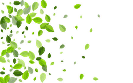 Forest Foliage Fly Vector Template. Falling Greens Backdrop. Mint Leaves Transparent Pattern. Leaf Motion Wallpaper.
