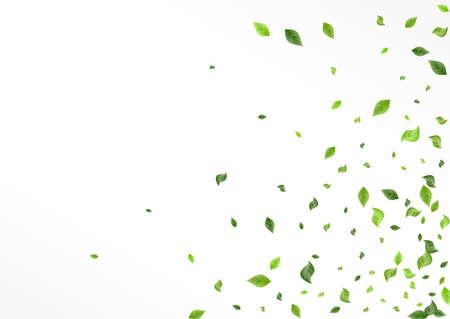 Olive Leaves Flying Vector White Background Illustration. Fresh Leaf Poster. Grassy Greenery Organic Plant. Foliage Wind Border.
