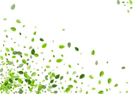 Lime Leaf Blur Vector Backdrop. Tea Foliage Pattern. Swamp Greens Fresh Plant. Leaves Forest Concept.