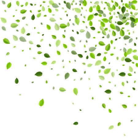 Forest Foliage Realistic Vector Plant. Organic Leaf Illustration. Olive Leaves Flying Template. Greens Spring Poster.