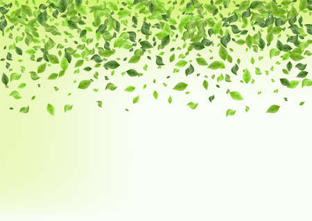 Lime Greenery Swirl Green Background Backdrop. Fly Leaves Branch. Olive Foliage Spring Border. Leaf Herbal Pattern. Zdjęcie Seryjne - 157473818