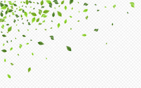 Grassy Leaf Herbal Vector Transparent Background Poster. Tea Greenery Plant. Swamp Foliage Wind Banner. Leaves Abstract Border.