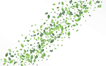 Olive Leaves Blur White And Gray Background Banner. Nature Leaf Plant. Forest Greenery Tree Brochure. Foliage Tea Wallpaper.