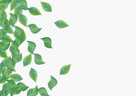 Lime Leaves Herbal Vector Transparent Background Plant. Fresh Greenery Poster. Grassy Foliage Abstract Template. Leaf Fly Concept.
