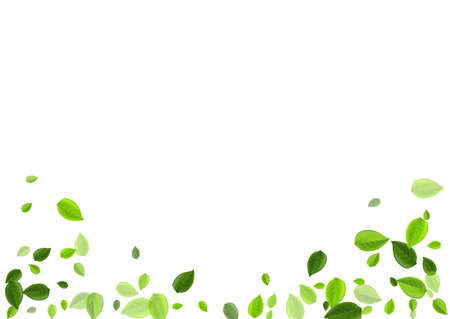 Olive Leaf Falling Vector Plant. Motion Greens Poster. Forest Foliage Ecology Branch. Leaves Tree Brochure. Ilustracja